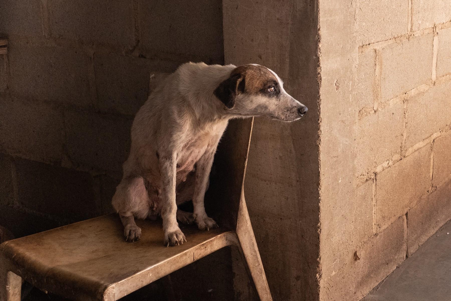 boston-dog-photographer-cartagena-colombia-animal-shelter-dog-rescue