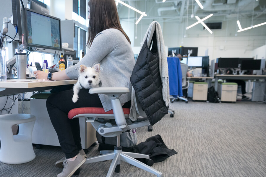 dog photography of dogs at work in pet friendly offices