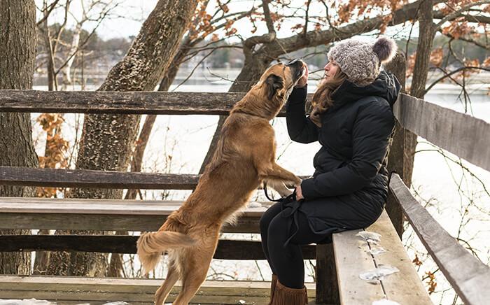 Dog Story Boomer