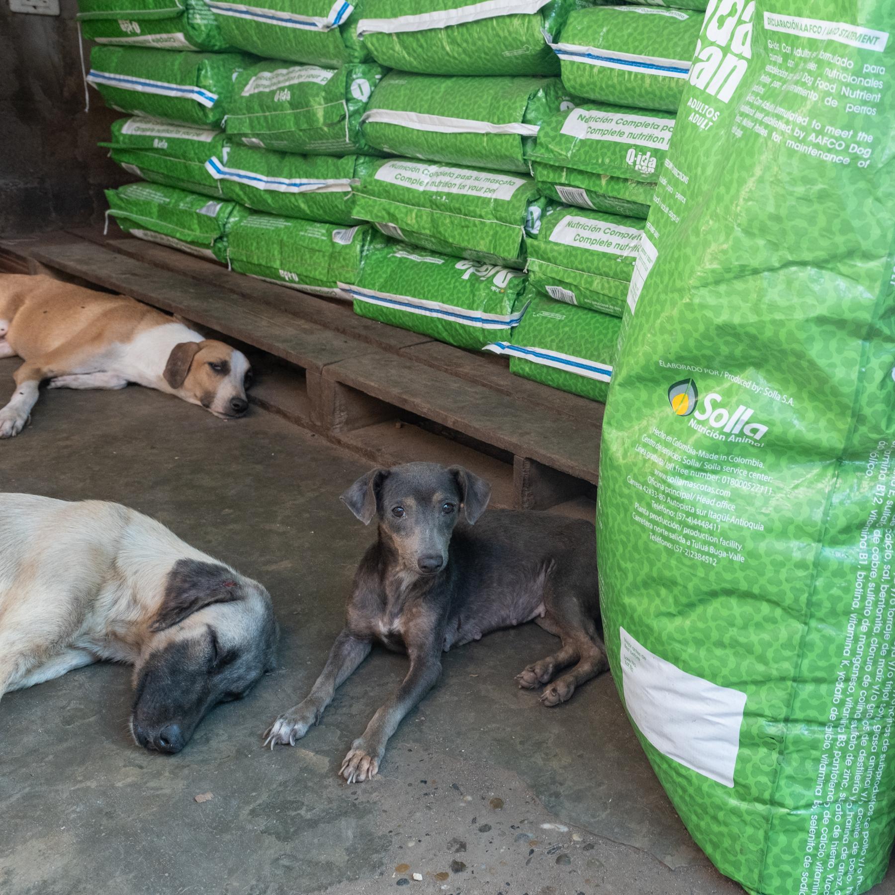 boston-dog-photographer-cartagena-colombia-animal-shelter-dog-rescuev
