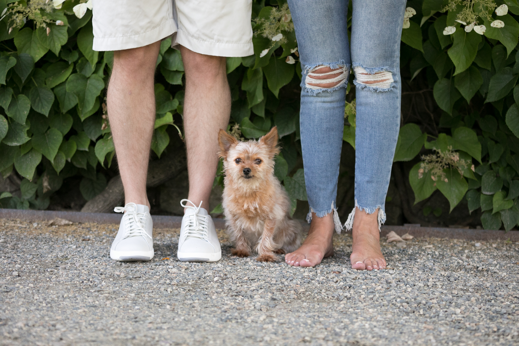 jamaica-plains-ny-arnold-arboretum-morkie-boston-dog-photographer