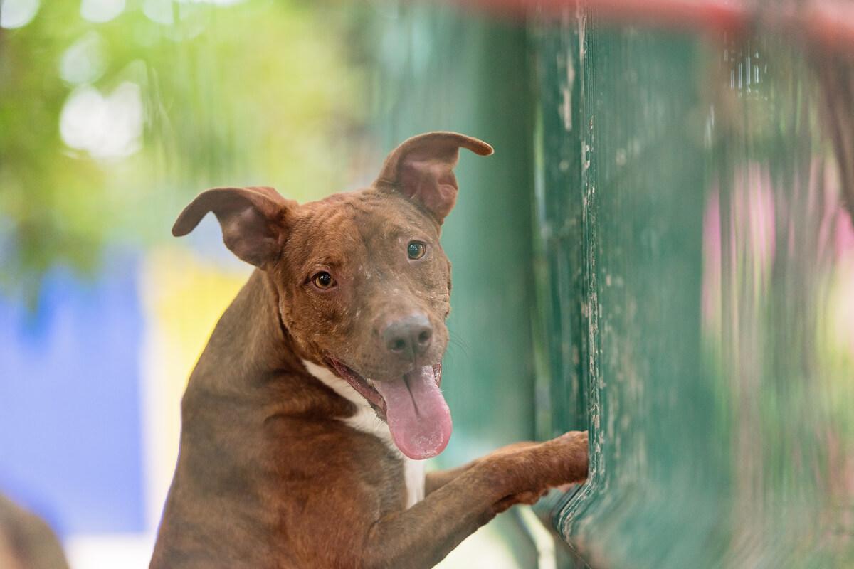 Dogs I Meet Playa del Carmen Josie Baughan