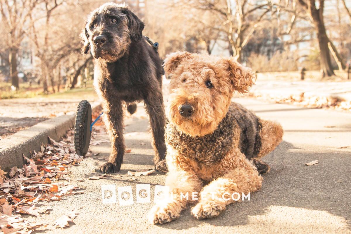 Dog photography New York