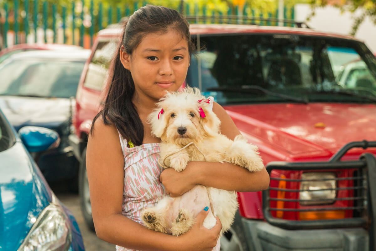 MG Vidas Clinic Mexico Dog Mission
