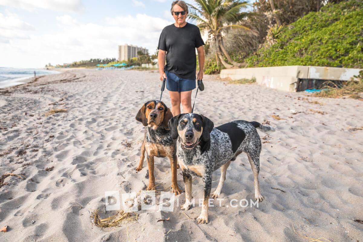 Ranger 3yo Riley 2yo Blue Tick Coonhound Florida