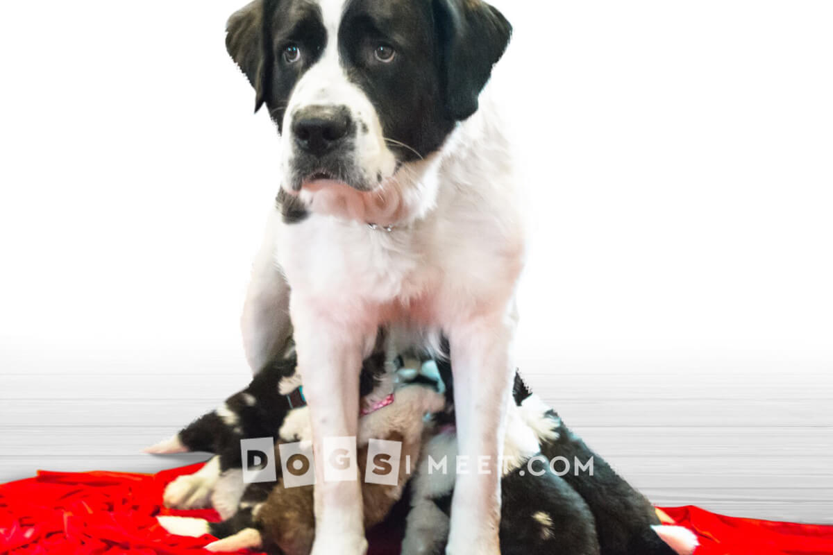 Ma Rescue Dog Adoption