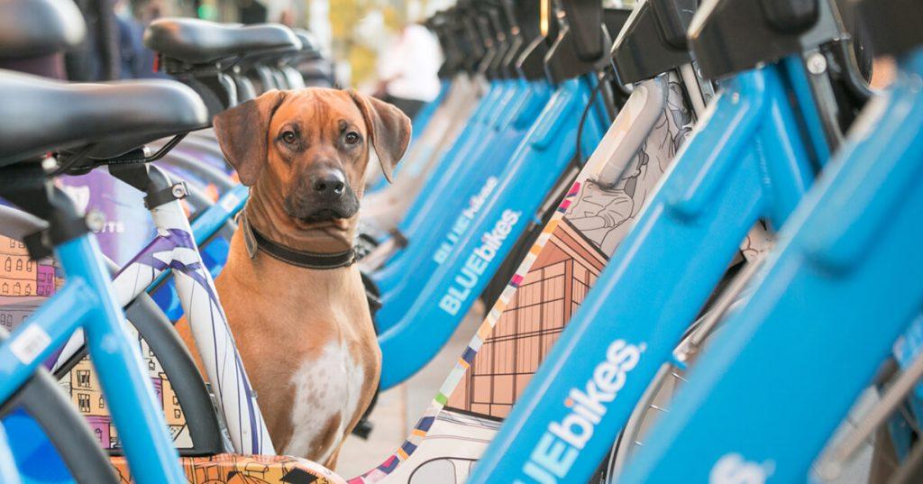 Dog Photoshoot Boston