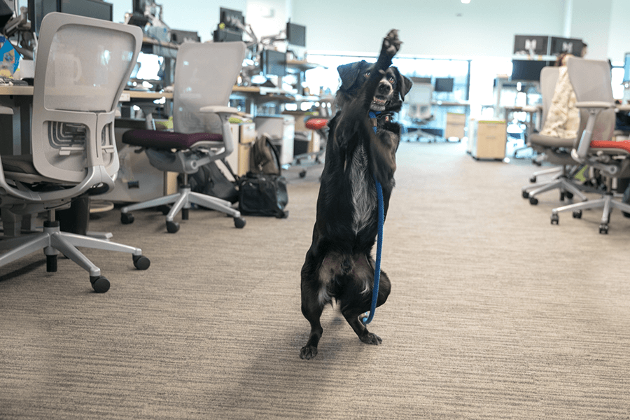 dog photography of dog at work in boston pet friendly offices