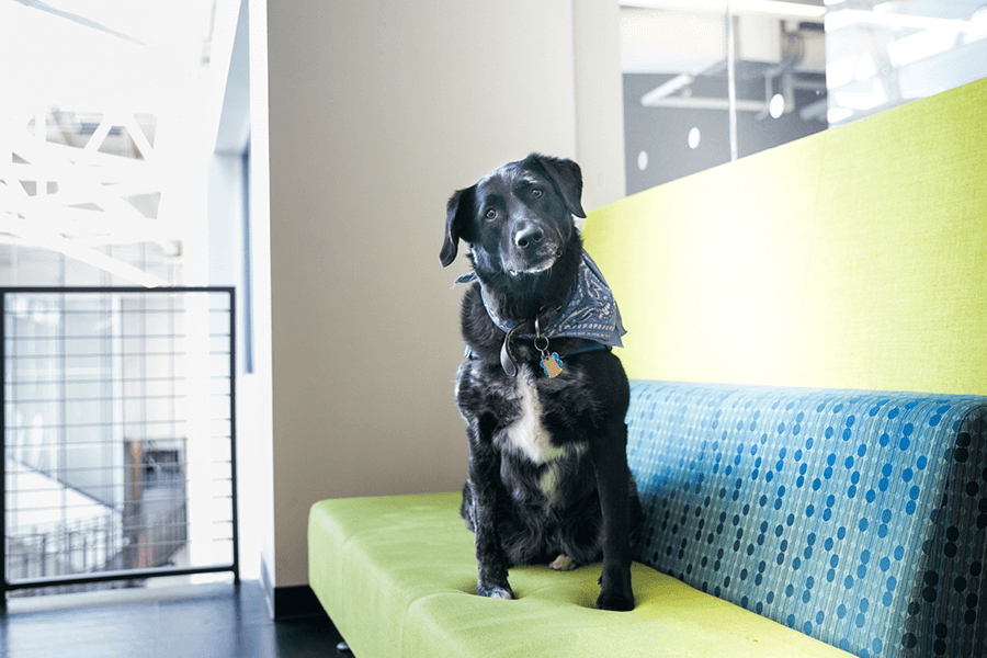 dog photography of dogs at work in boston pet friendly offices