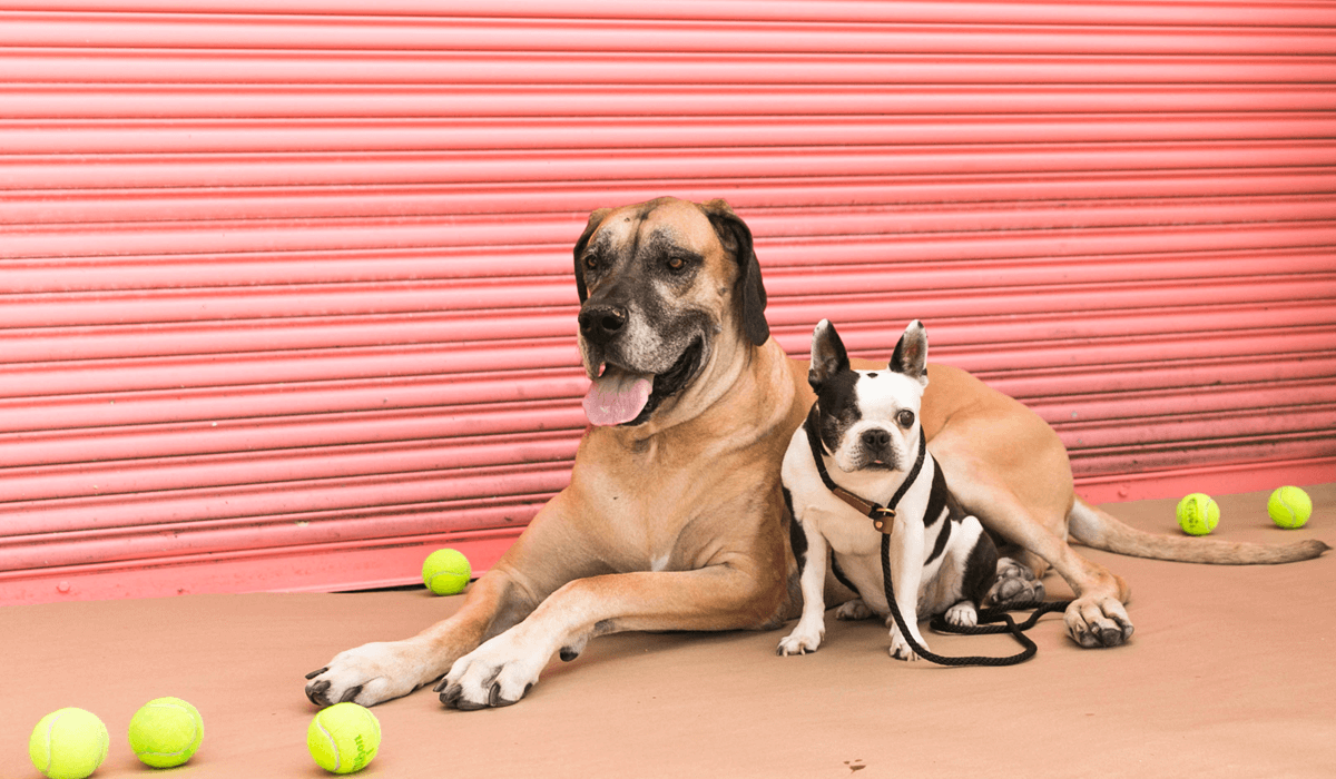 Zues and Bolt Dog Photoshoot
