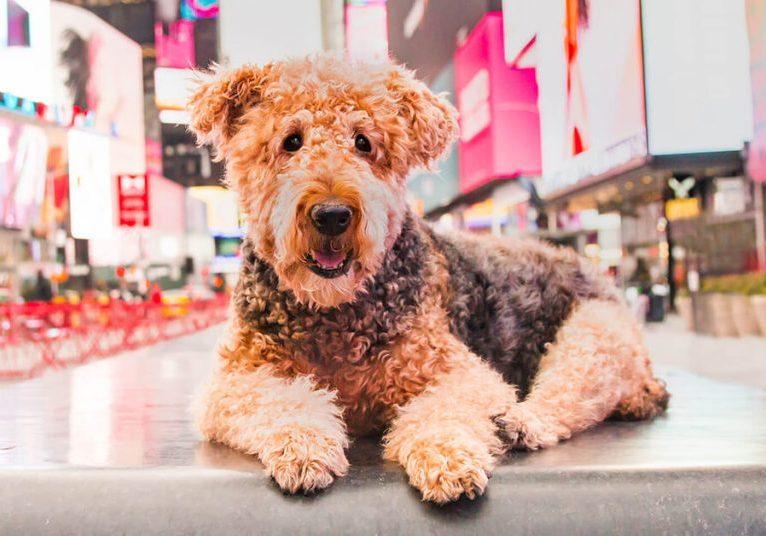 dogs-i-meet-tribute-cadbury