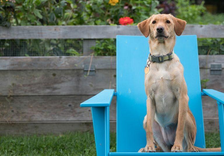 Athenahealth Global United Dog Project Fundraiser