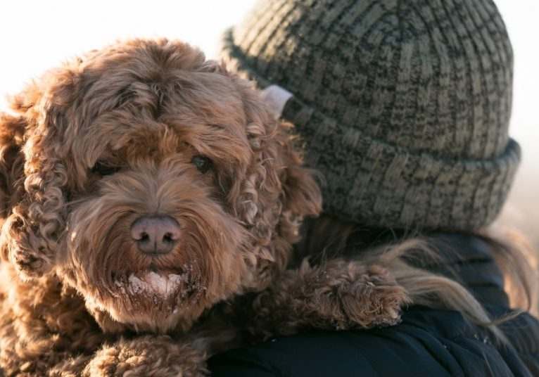 Bella the Lap Dog