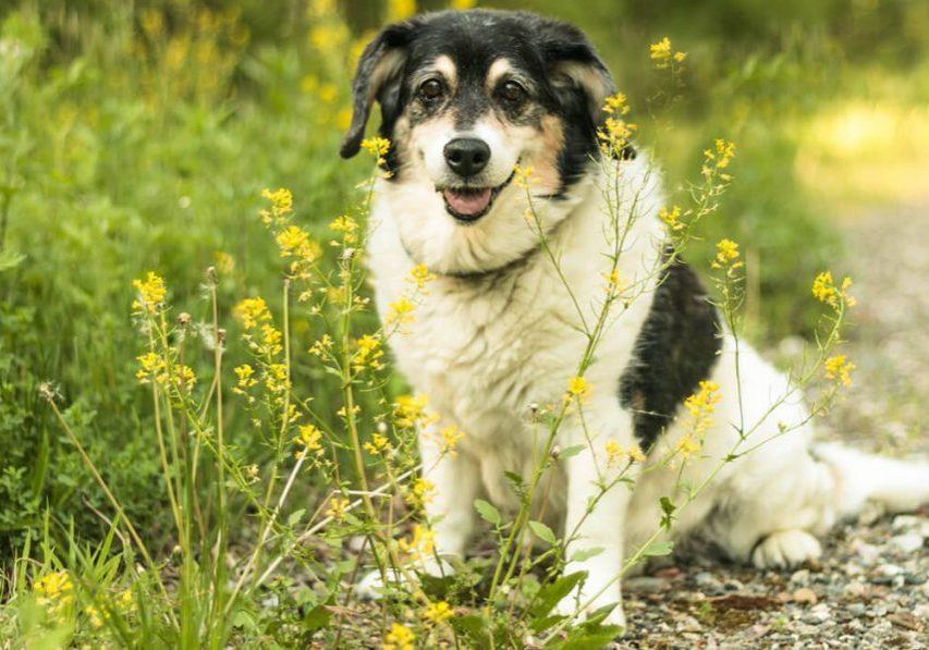 Dogs I Meet Sophie