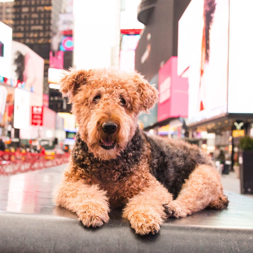 Dog photoshoot Times Square