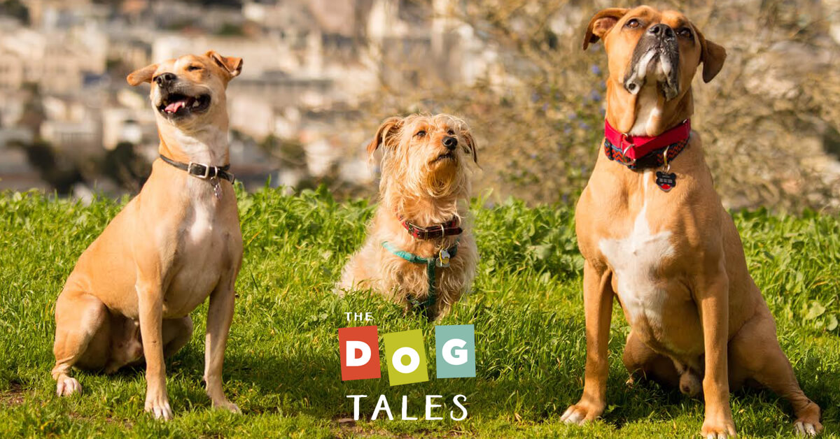 The Dog Tales