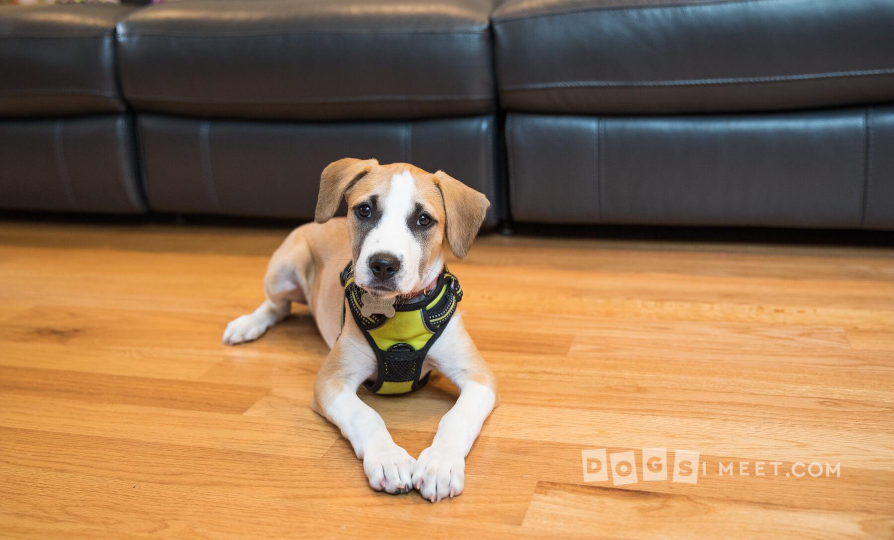 Zoro Puerto Rico Pup
