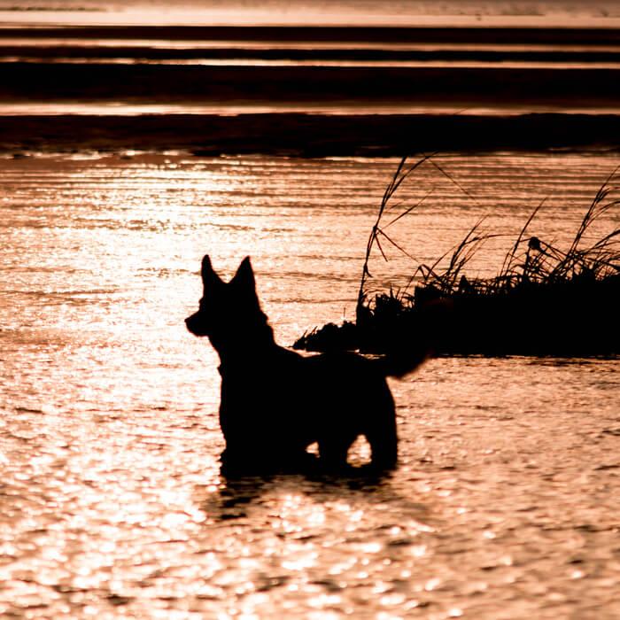 Epic Tales Dog Photoshoot