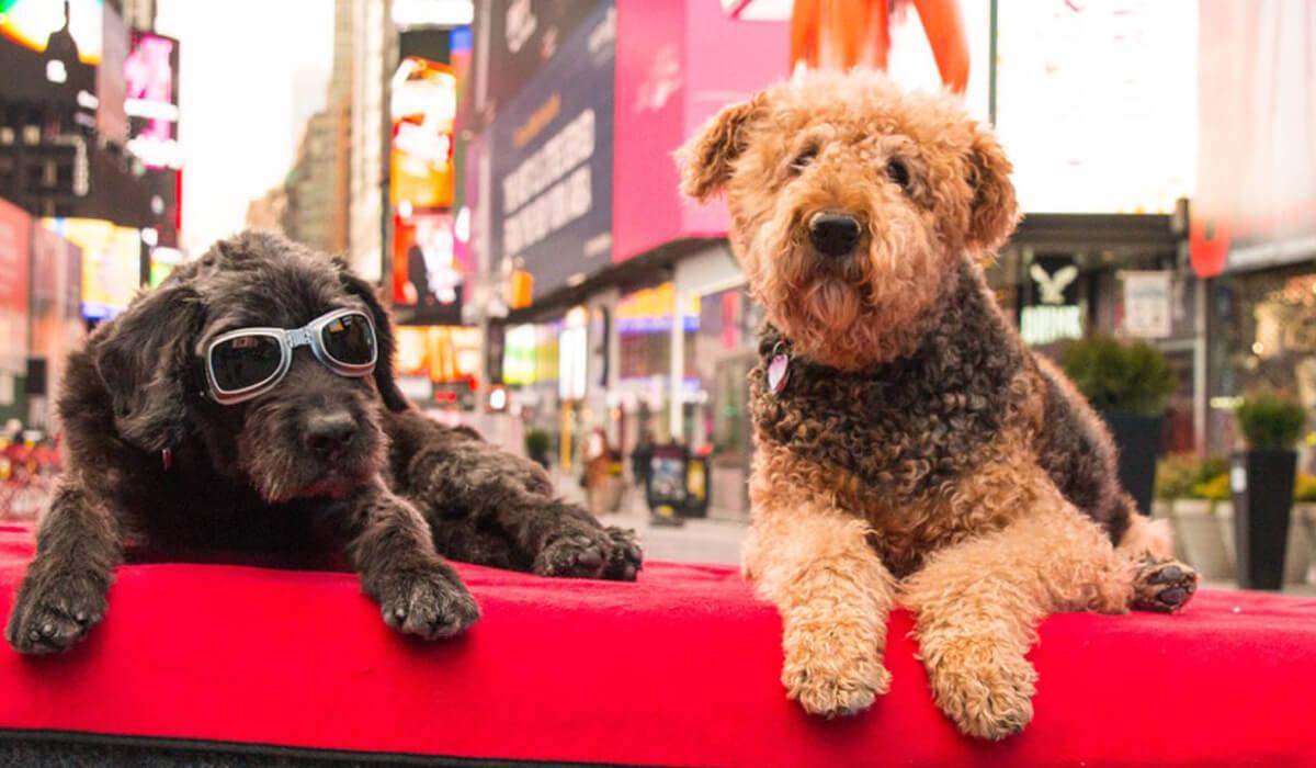 Dog Photoshoot New York