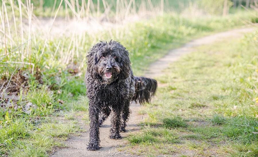 Kingsley Dogs I Meet Story