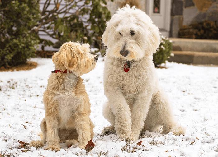 Dogs I Meet Media Assets