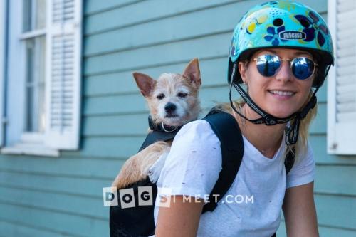 Ally plus dog