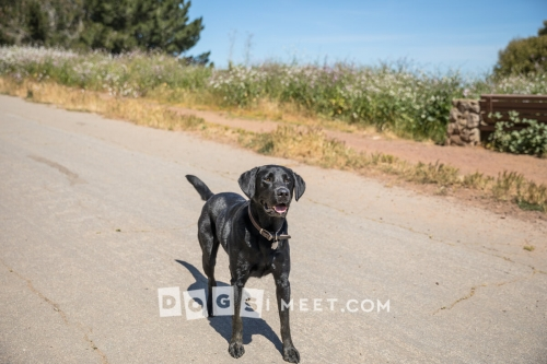 Black Lab BernalHeights
