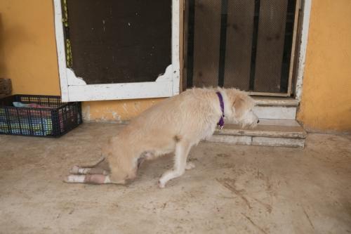 Holbox_shelter-6505