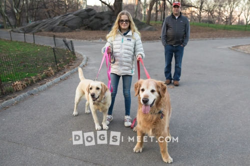 Isaac-Golden-Retriever-11years-Lucy-Yellow-Lab-7years