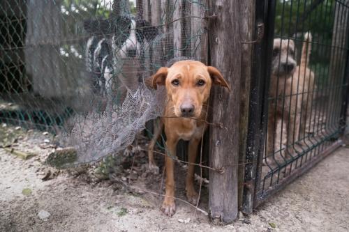 PAR shelter_Mexico