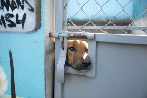 PAR_shelter_Mexico-5285