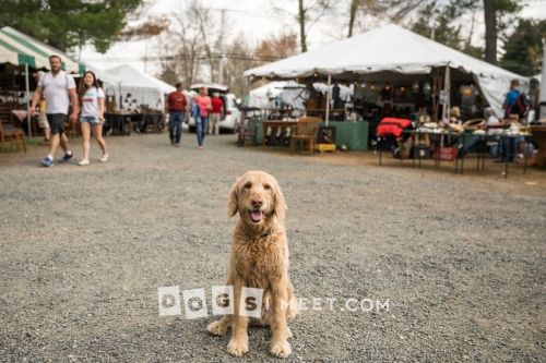 Dog at Brimfield Antiques Fair