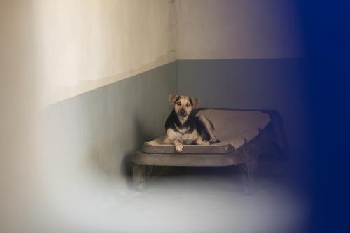 SOS el arca_shelter-4942