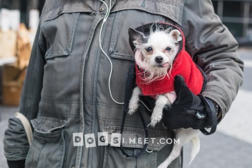 Dog Photo New York