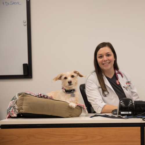 boston-dog-photographer-human-dog-bond-veterinary-emergency-hospital-nanuet-ny