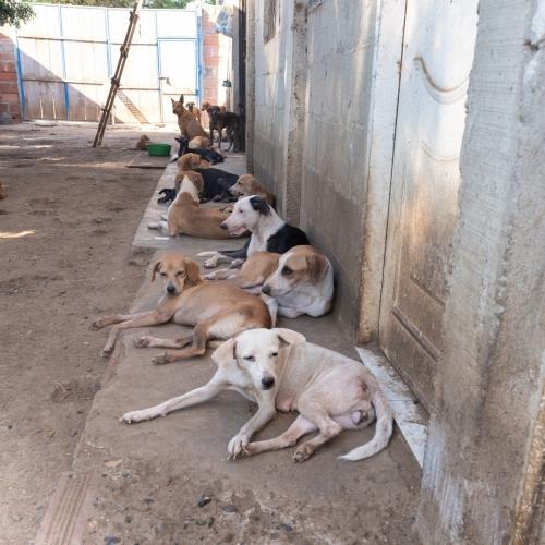 shelter_cartagena-2503