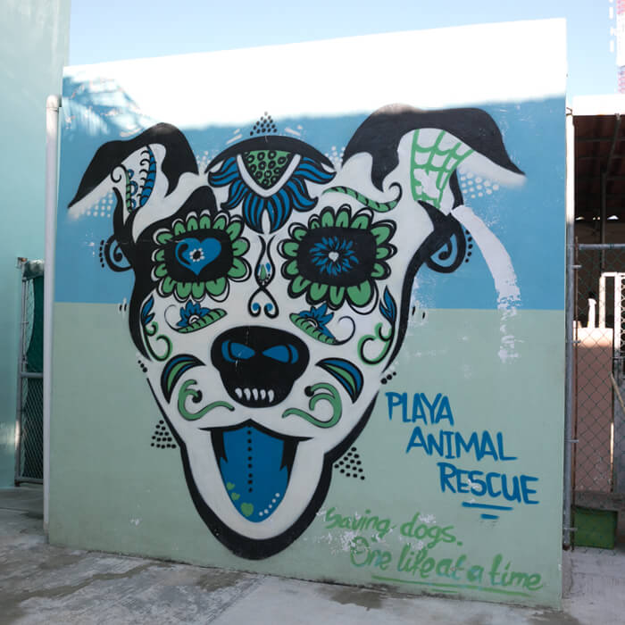 playa animal rescue