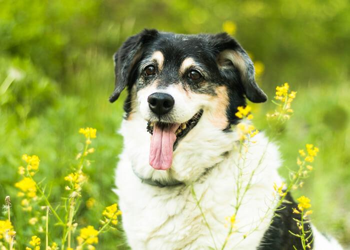 Senior Dog Photoshoot